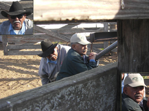 Felix (left) and JB immobilize each set of heifers by closing the squeeze shoot and holding it until the crew is finished.