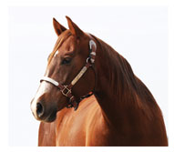 Ranch Horse: Royal Caliche Red - a.k.a. Prime